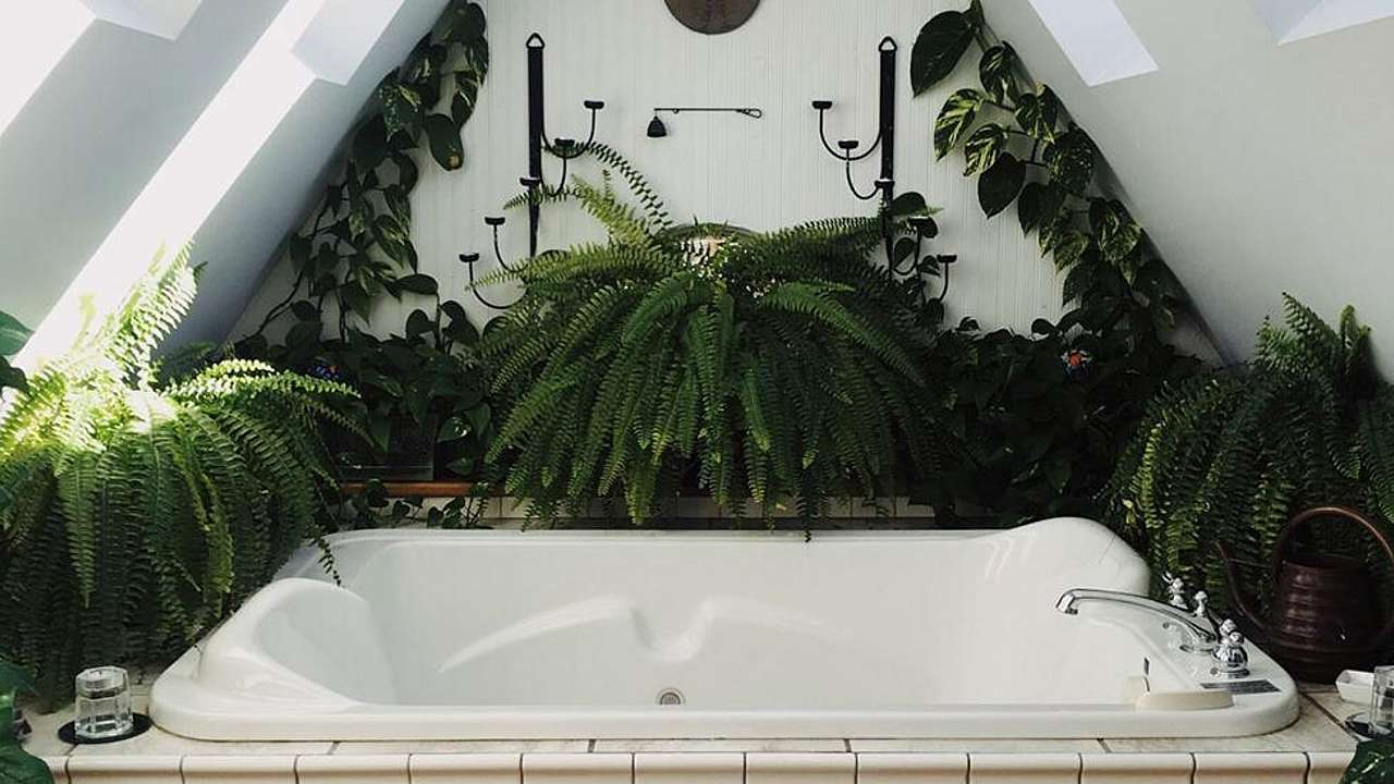 Diese 16 Zimmerpflanzen gedeihen auch im Badezimmer - amicella.de