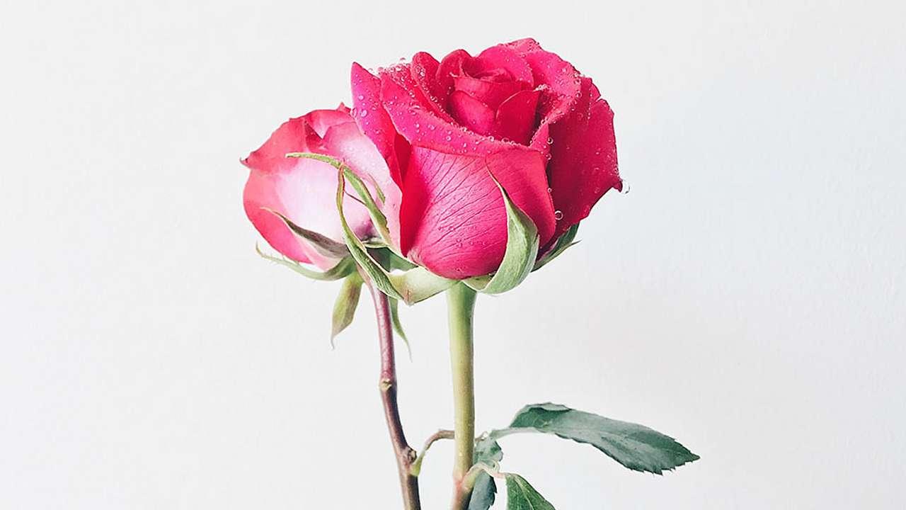 Liebe machen Schwarz Leidenschaftliche Home »